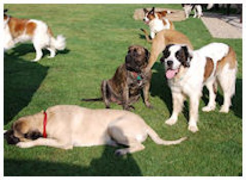 Puppy Love! - Fundraiser for Gentle Ben's Giant Breed Rescue